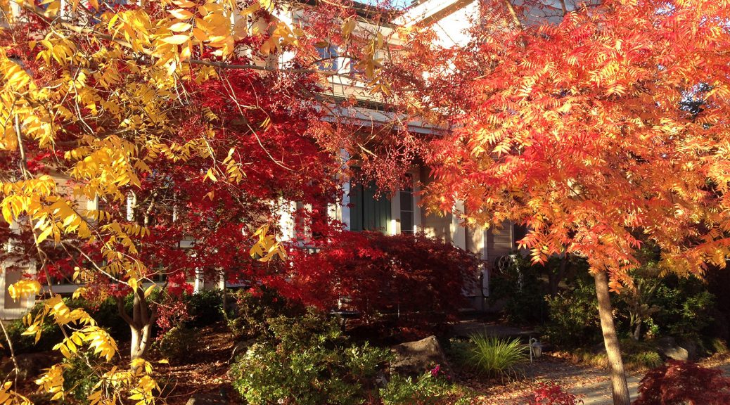 Landscaping Ideas for Minnesota in the Fall
